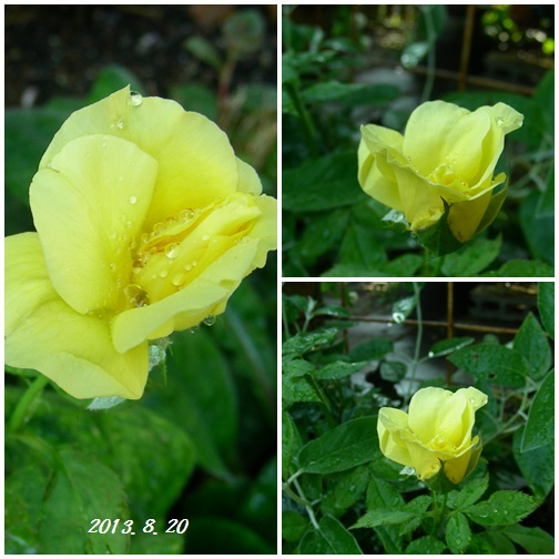 恵みの雨が降りました(^_-)_b0096584_20585163.jpg