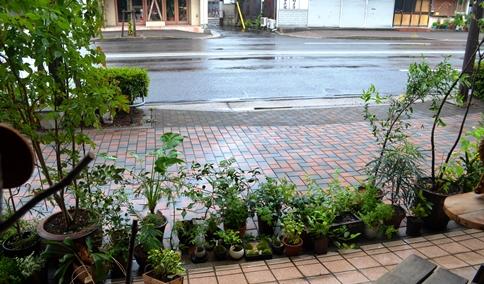 久しぶりの雨の日_d0263815_1301470.jpg