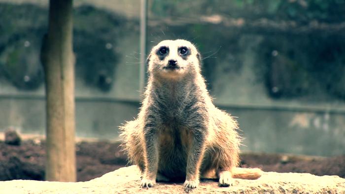 (動画あり)ミーアキャット 千葉市動物公園 _c0222817_13191637.png