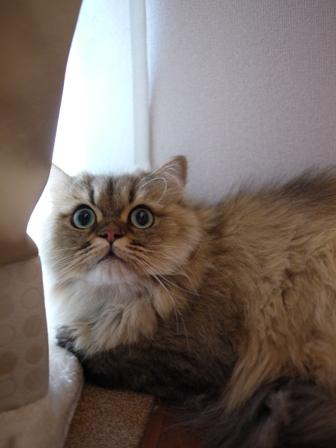 猫のお友だち ハチくん編。_a0143140_1831064.jpg