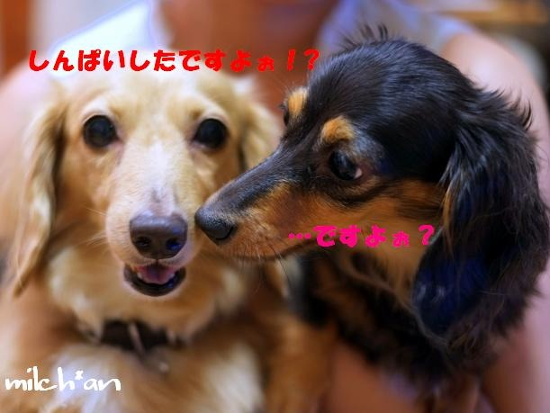 b0115642_1992243.jpg