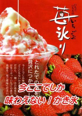 苺氷り_c0094442_9544599.jpg