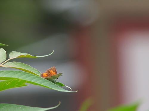 久しぶりに地元の蝶と遊ぶ_e0305074_19323125.jpg