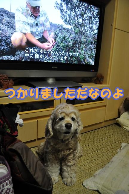 b0067012_1521687.jpg