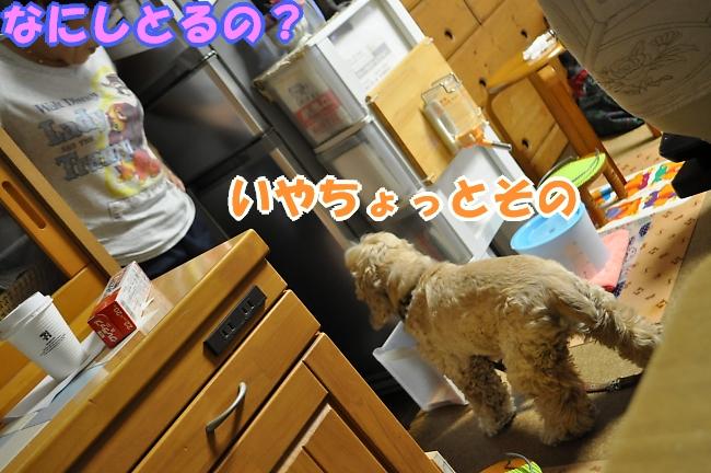 b0067012_20139.jpg