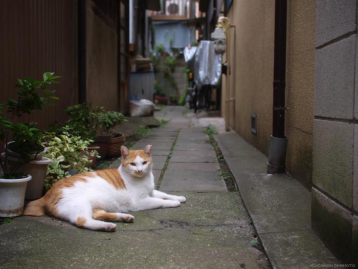 東京・下町のねこ_f0197128_205810.jpg