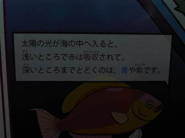くらげさん_d0044239_19481297.jpg