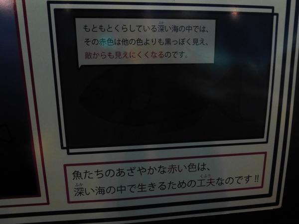 くらげさん_d0044239_19481598.jpg