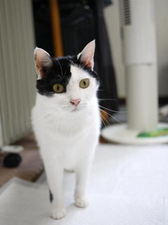 猫のお友だち みーちゃんガジュちゃんマルちゃん + 犬のお友だち ハナちゃんルナちゃん編。_a0143140_22123435.jpg