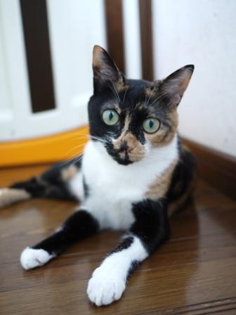 猫のお友だち みーちゃんガジュちゃんマルちゃん + 犬のお友だち ハナちゃんルナちゃん編。_a0143140_2216324.jpg