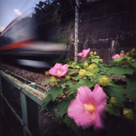 青梅線のある風景(1) 東京都青梅市 Pinhole Photography_f0117059_17503919.jpg