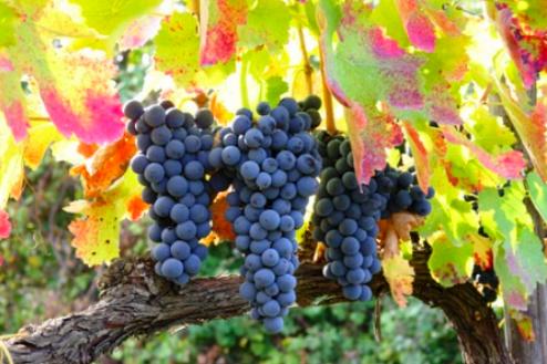 小さな村の極上ワイン_e0224461_759197.jpg
