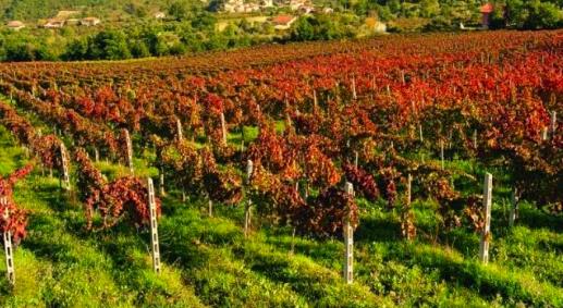小さな村の極上ワイン_e0224461_831970.jpg