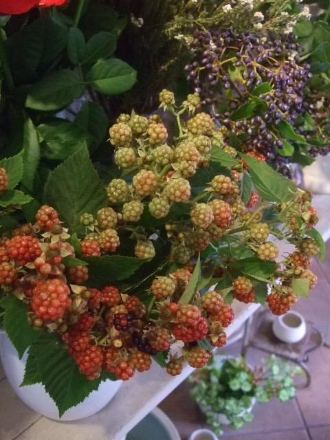 オークリーフ(赤い実、赤い花)_f0049672_1555268.jpg