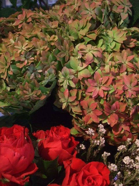オークリーフ(赤い実、赤い花)_f0049672_15554591.jpg
