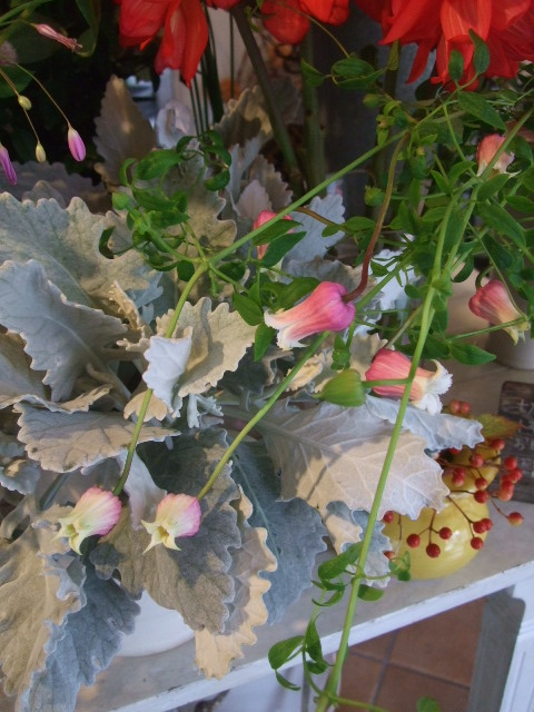オークリーフ(赤い実、赤い花)_f0049672_15562827.jpg