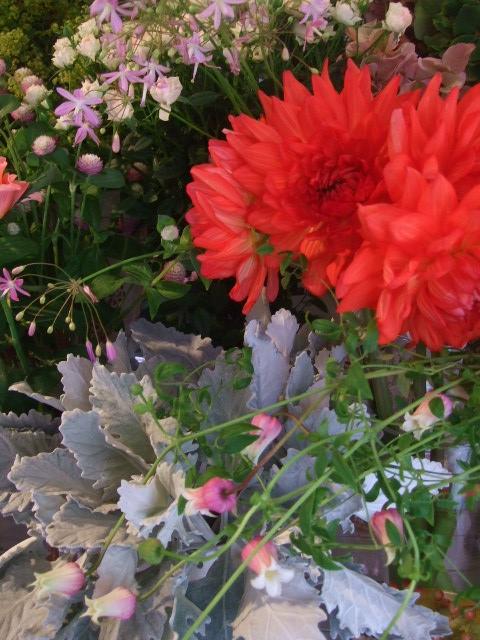 オークリーフ(赤い実、赤い花)_f0049672_15564391.jpg