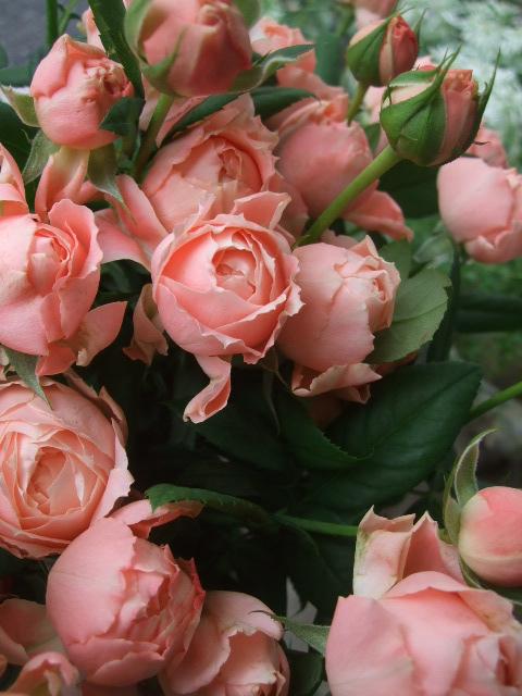 オークリーフ(赤い実、赤い花)_f0049672_1556490.jpg