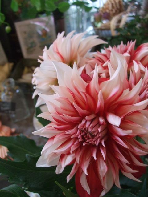 オークリーフ(赤い実、赤い花)_f0049672_15572516.jpg