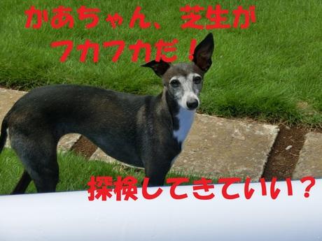 f0223972_8213934.jpg