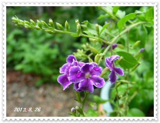 生きのびた花々~♪_b0096584_22584242.jpg