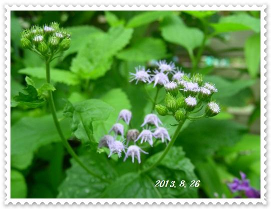 生きのびた花々~♪_b0096584_22585680.jpg