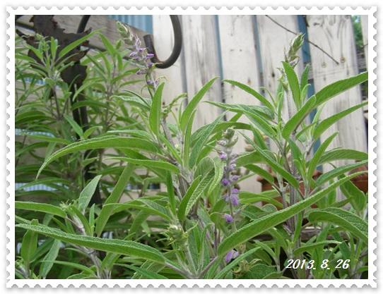 生きのびた花々~♪_b0096584_2259342.jpg