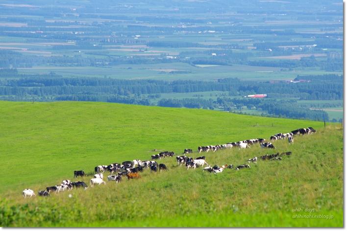 ナイタイ高原牧場 と 最後の楽しいキャンプ!_f0179404_21343672.jpg