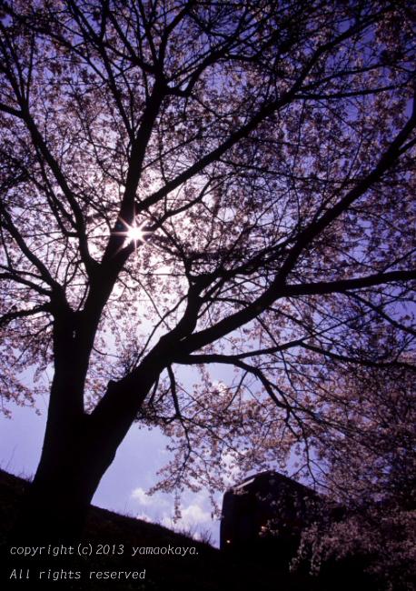 桜の木漏れ日 ~がんばろう三江線_d0309612_2354158.jpg