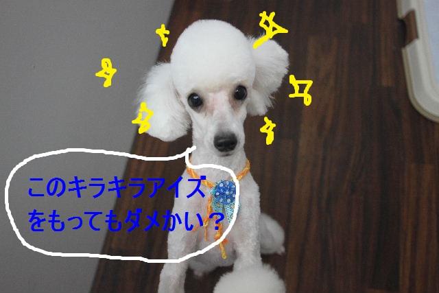 b0130018_0383871.jpg