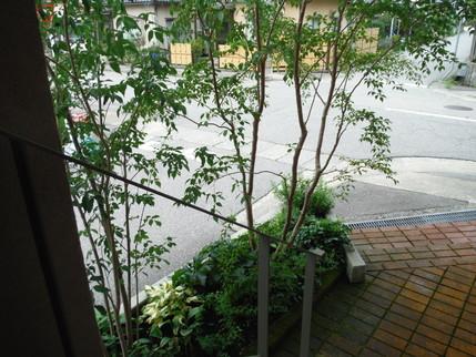 雑木の庭_b0288732_19111035.jpg