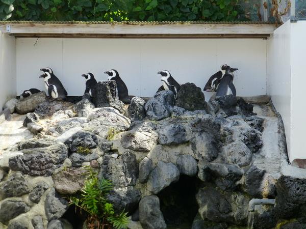 ペンギンちゃん_d0044239_19415046.jpg