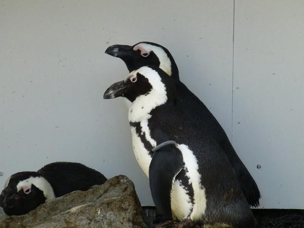ペンギンちゃん_d0044239_19415333.jpg