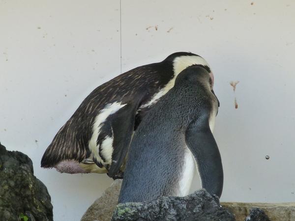 ペンギンちゃん_d0044239_19415513.jpg