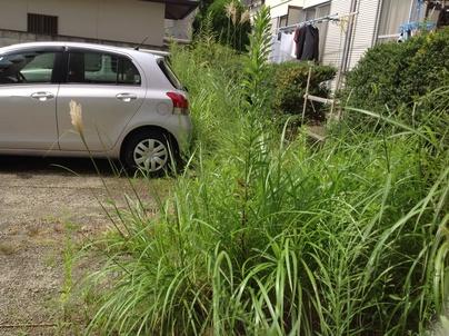 駐車場の除草と除草剤散布_c0186441_17295470.jpg