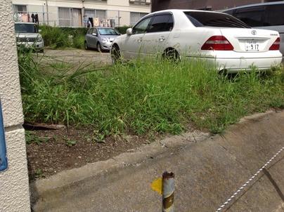 駐車場の除草と除草剤散布_c0186441_17334832.jpg