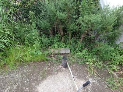 駐車場の除草と除草剤散布_c0186441_17373824.jpg