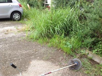 駐車場の除草と除草剤散布_c0186441_1738135.jpg