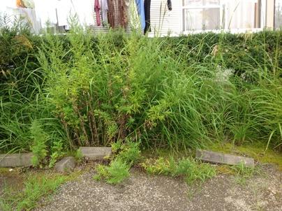 駐車場の除草と除草剤散布_c0186441_17381913.jpg