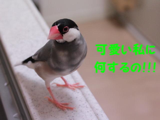 b0158061_22331381.jpg