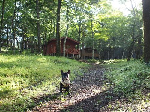 summer camp in 富士山 _e0243765_11325481.jpg