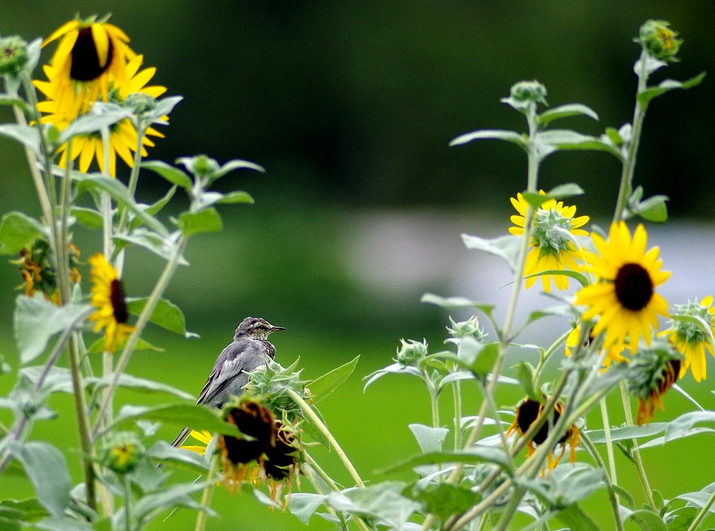 花と鳥_f0215767_15131475.jpg