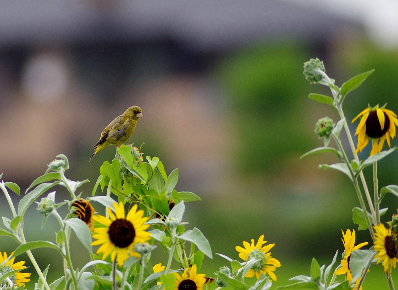 花と鳥_f0215767_15132280.jpg