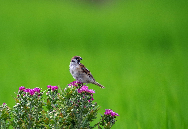 花と鳥_f0215767_1513287.jpg