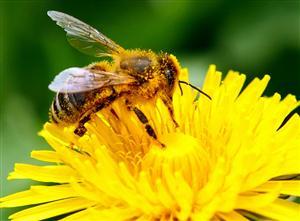 ハチを守れ! 危険農薬にNO!_b0064113_029759.jpg