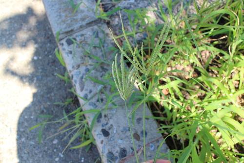 花の咲かない花_f0226713_0563957.jpg