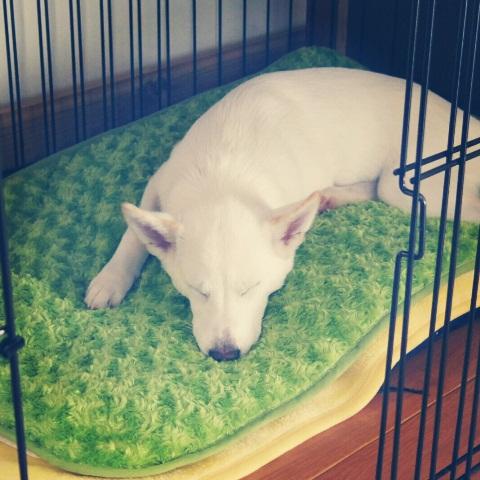 そもそも、犬を飼うことになった理由(ワケ) ⑧_b0090517_20261042.jpg