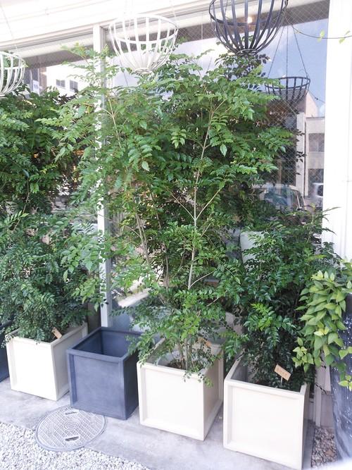 植物_f0129627_14503940.jpg