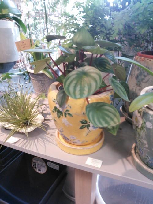 植物_f0129627_14522837.jpg