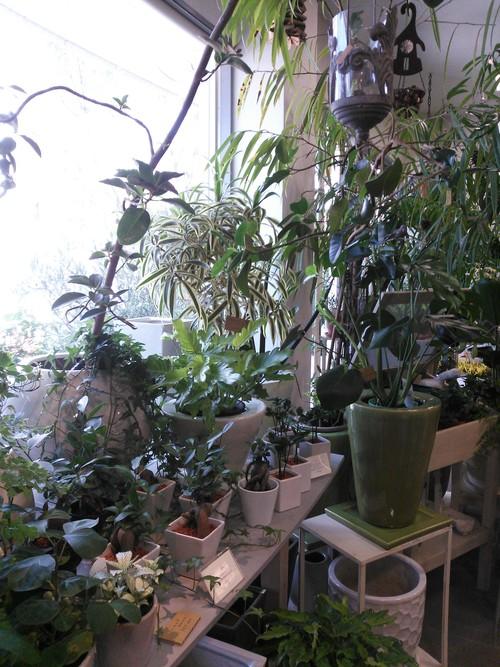 植物_f0129627_1503321.jpg